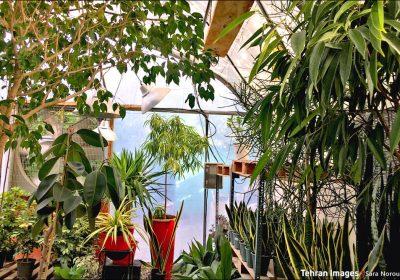 خانه گیاه افرا در شهرک آپادانا